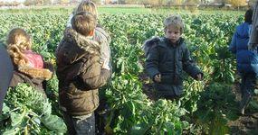 Bioboerderij De Zaaier - Ruddervoorde - Scholen
