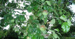 Bioboerderij De Zaaier - Ruddervoorde - Fruit