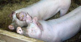 Bioboerderij De Zaaier - Ruddervoorde - Dieren
