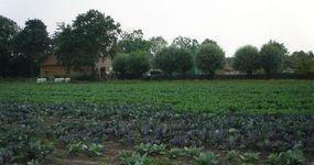Bioboerderij De Zaaier - Ruddervoorde - Land