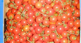 Bioboerderij De Zaaier - Ruddervoorde - Groentenpaketten